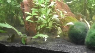 Aquarium Neueinrichtung 1. und 2. Woche