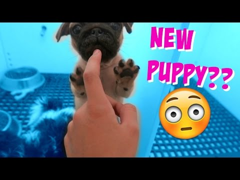 🐶 DO WE GET A NEW PUPPY?? 🐶 SHOPPING IN FLORIDA FOR THE NEW HOUSE!!