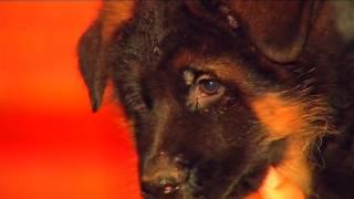 Российская полиция передает в дар французским коллегам щенка овчарки