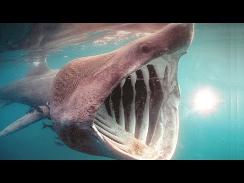 8 Creepiest Ocean Facts & Discoveries