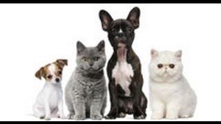 Лечение теплом и любовью: чем полезны кошки и собаки