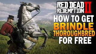 How To Get RARE Brindle Thoroughbred FREE! Fastest Horse! Red Dead Redemption 2 Best Horses [RDR2] Video
