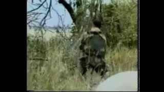 Война в Чечне Пора домой