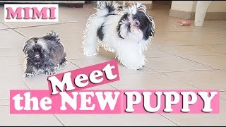 Puppies meet for the First time | TOO CUTE