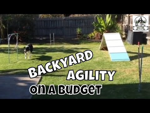 DIY Backyard Dog Agility Training Course - Backyard Set Up For Border Collie Birthday Party