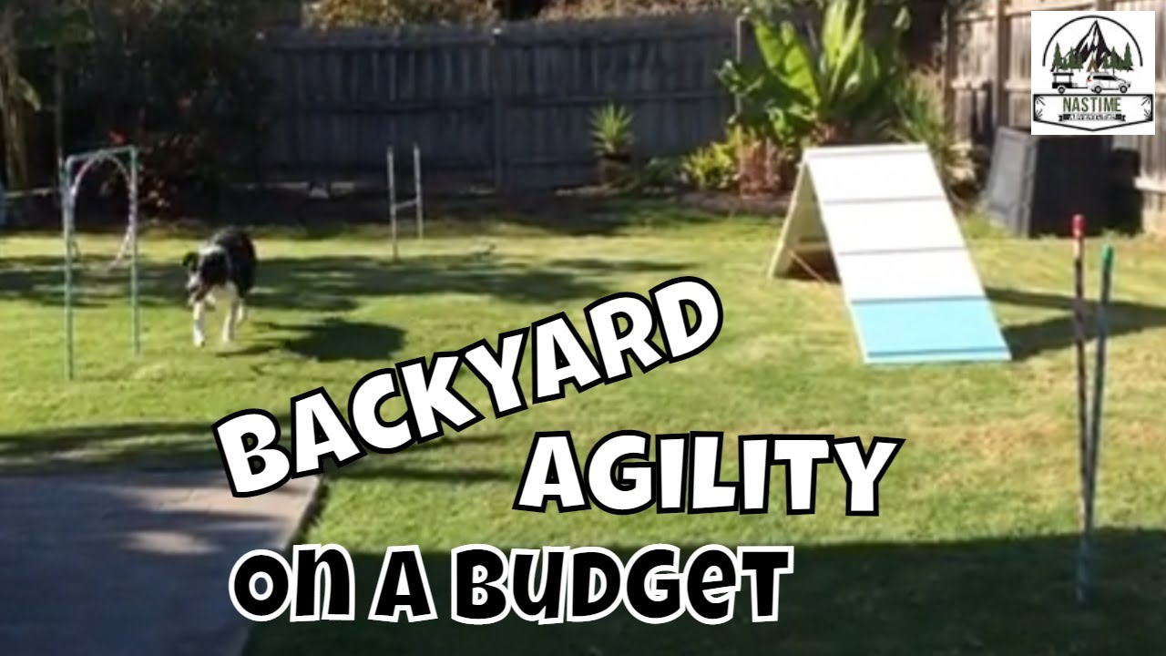DIY Dog Agility Course Set up for Border Collie 1st Birthday Party - DIY Dog Agility Course Set Up For Border Collie 1st Birthday Party