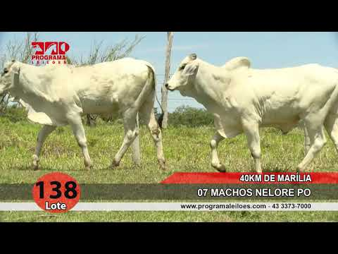 Lote 138