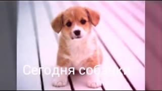 Картинки про собачек