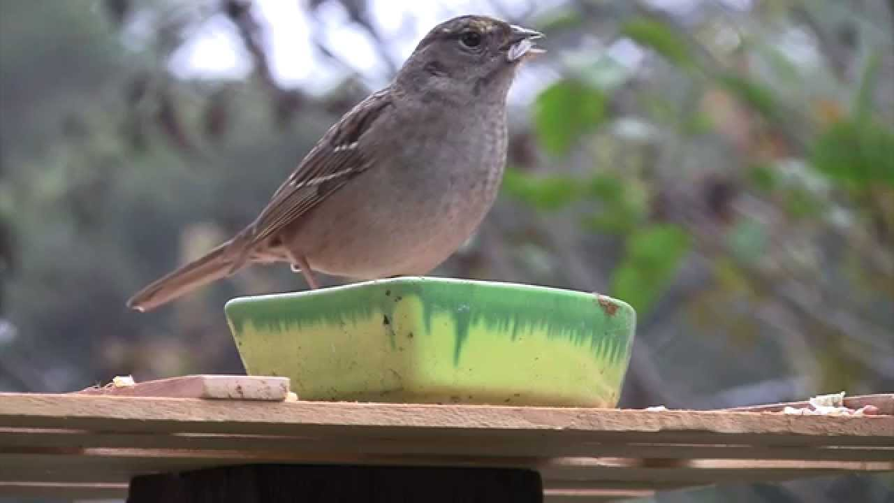 Video For Cats  Birds Eating Seed