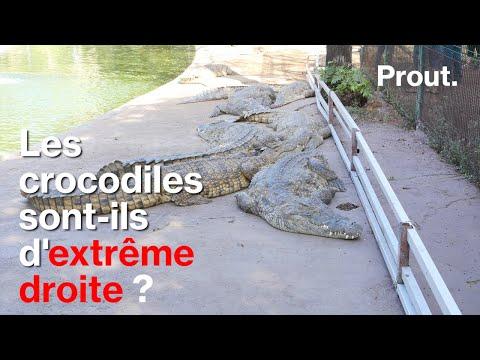 Prout. Les crocodiles sont-ils d'extrême-droite ?