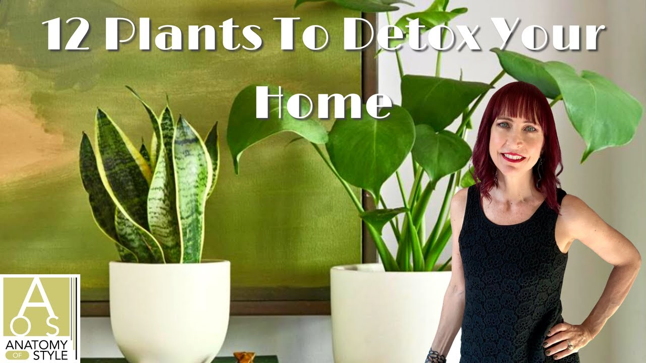 12 Plants To Detox Your Home that are low maintenance and feng-shui.