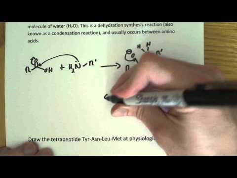 Peptide bond formation and Amino Acid structure problem