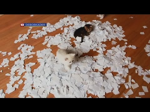 The Daily Joe: Kittens Playing In Paper