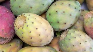 Prickly Pear: TOP 8 Surprising Health Benefits of Prickly Pears