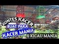 Kacer Mania Kontes Kacer  Mp3 - Mp4 Download