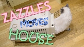 Zazzles the Ragdoll Moves House