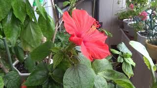 Комнатные цветы растения. Сюрприз. В преддверии праздника. Цветение цветов. Кошки/рыбки.