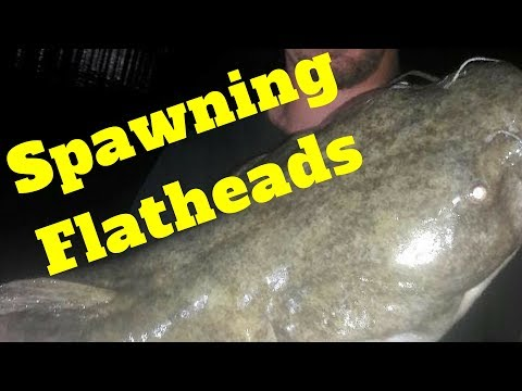 CHANNEL CATFISHING DURING THE SPAWN. from YouTube · Duration:  2 minutes 41 seconds  · 670 views · uploaded on 7/31/2014 · uploaded by cavedweller1959
