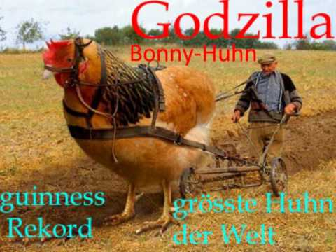 GuinnesWorld Record grösstes Huhn der Welt - YouTube