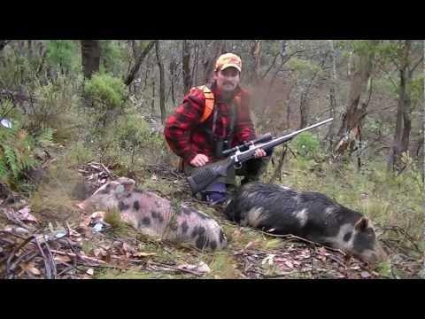 State Forest Pig Hunt