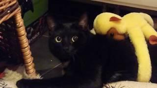 CAT, PUSSY CAT, PARANOID CAT !