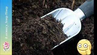 Подготовка грунта к посадке. Прокаливание грунта в духовке.