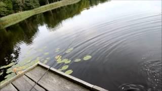 🇩🇰 Geddefiskeri i Nordsjælland 🎣 Gedde på 2 KG