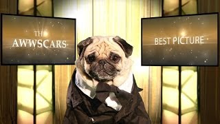 The Oscars 2014 - Best Picture Nominees (cute Pug Version)