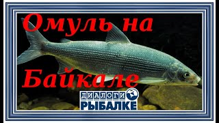 Диалоги о рыбалке 090 Байкал