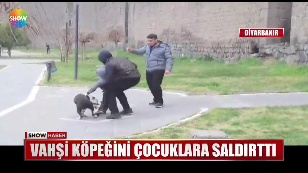 Vahşi köpeğini çocuklara saldırttı