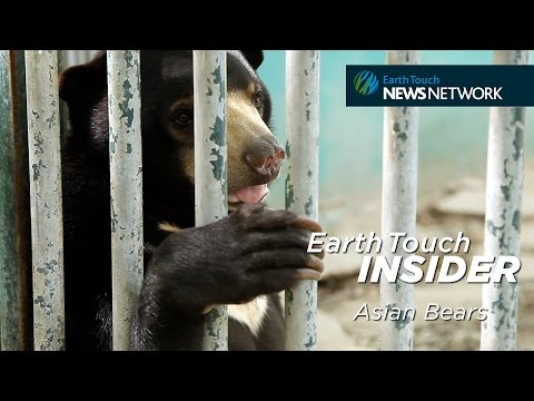 The Plight of Asian Bears Part 1: The Pet Trade