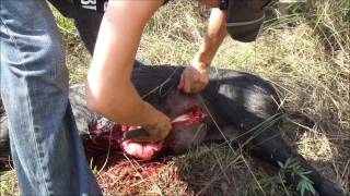 Repeat youtube video Pig Hunting.wmv