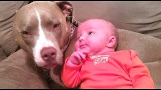 Funny And Cute Pitbull Dogs Love Babies Compilation 2015 [new]