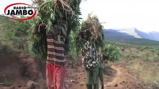 Download Video God ordered me to plant bhang and sell it, Limuru man says MP3 3GP MP4