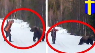 Atak niedźwiedzia: mężczyzna odstrasza wielkiego niedźwiedzia krzykiem