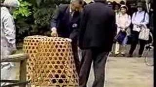 Japanese Poultry Show - Part 1