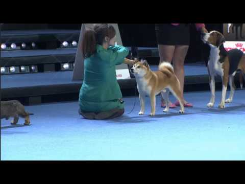 World Dog Show 2014 Helsinki - Best in show