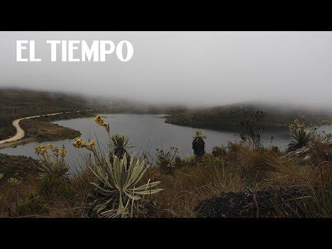 9. Sumapaz, alma de páramo | Especies: una nueva expedición | EL TIEMPO y Canal Tr3ce