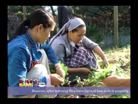 Thanh Tam Organic farm ( Da Nang City )