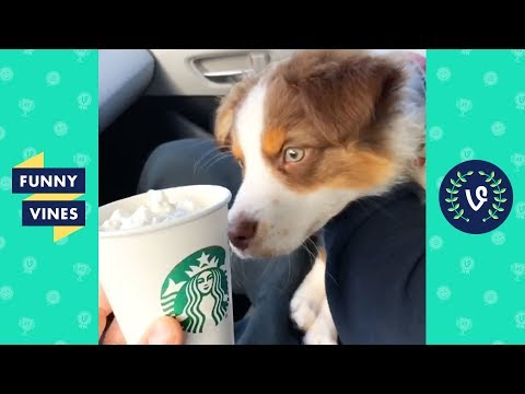 TRY NOT TO LAUGH - Funny Animals To Make You Smile!