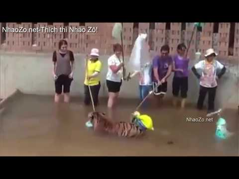 Kinh hoàng những pha động vật tấn công người