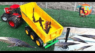 BRUDER Toys - Real Fish TRACTOR Transport truck fish!