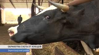 От клещей обработали почти весь рогатый скот области