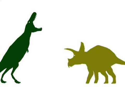 ASDC - Triceratops vs Zhuchengtyrannus