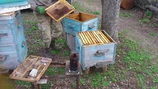 Пчелы плохо развиваются - Мои ошибки пчеловодства