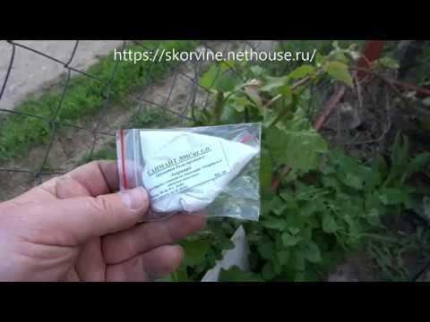 Внеплановая майская обработка винограда от виноградного зудня