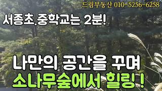 [양평토지] 서종ic5분거리  소나무숲에 쌓여 있는 나…