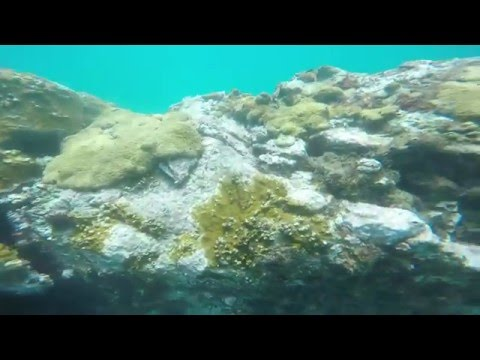Snorkelling in Stone Haven Bay, Tobago 2 (GoPro)