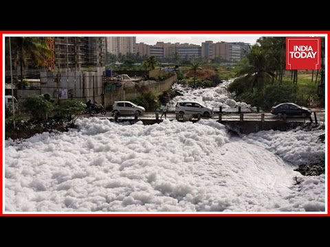 Authorities To File Status Report On Bellandur Lake Clean Up To NGT