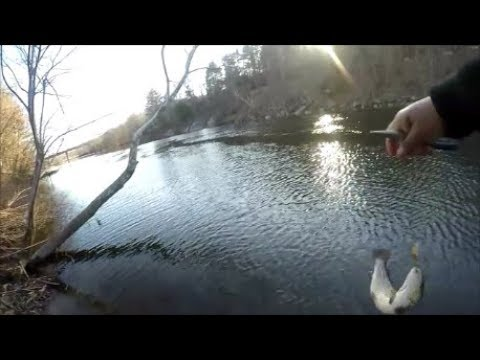 Naugatuck River Fishing